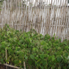 Eburru Ecotourism and Environmental Organisation