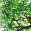 Platbos Conservation Trust